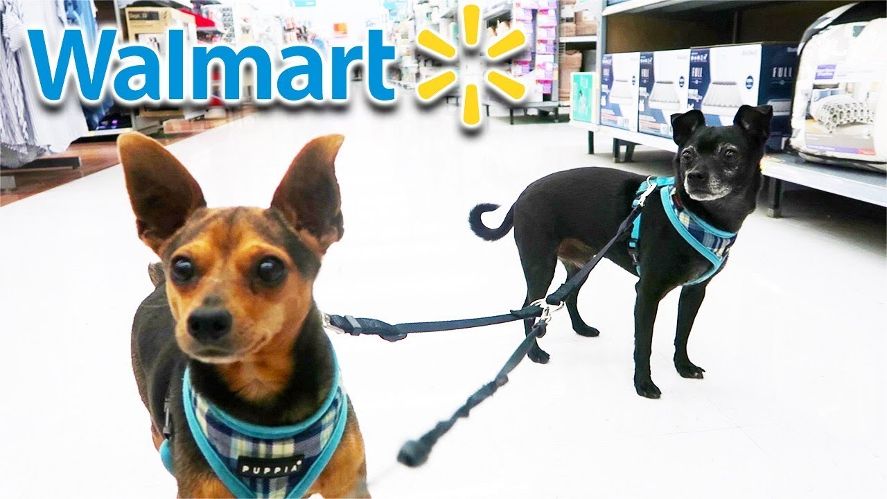 Dogs First Trip to Walmart Gets Emotional! See what they bought!