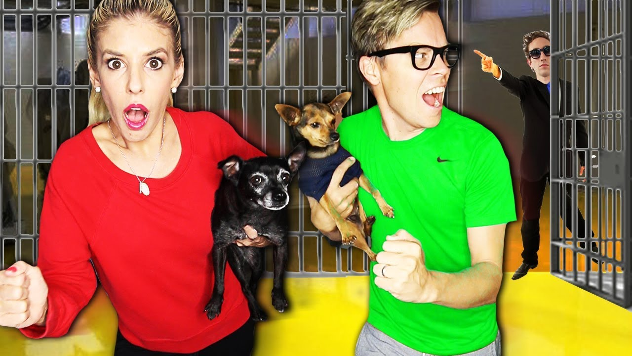 Rescuing Our Dogs from the GMI Hide and Seek Chase! (Game Master Network Escape Room)
