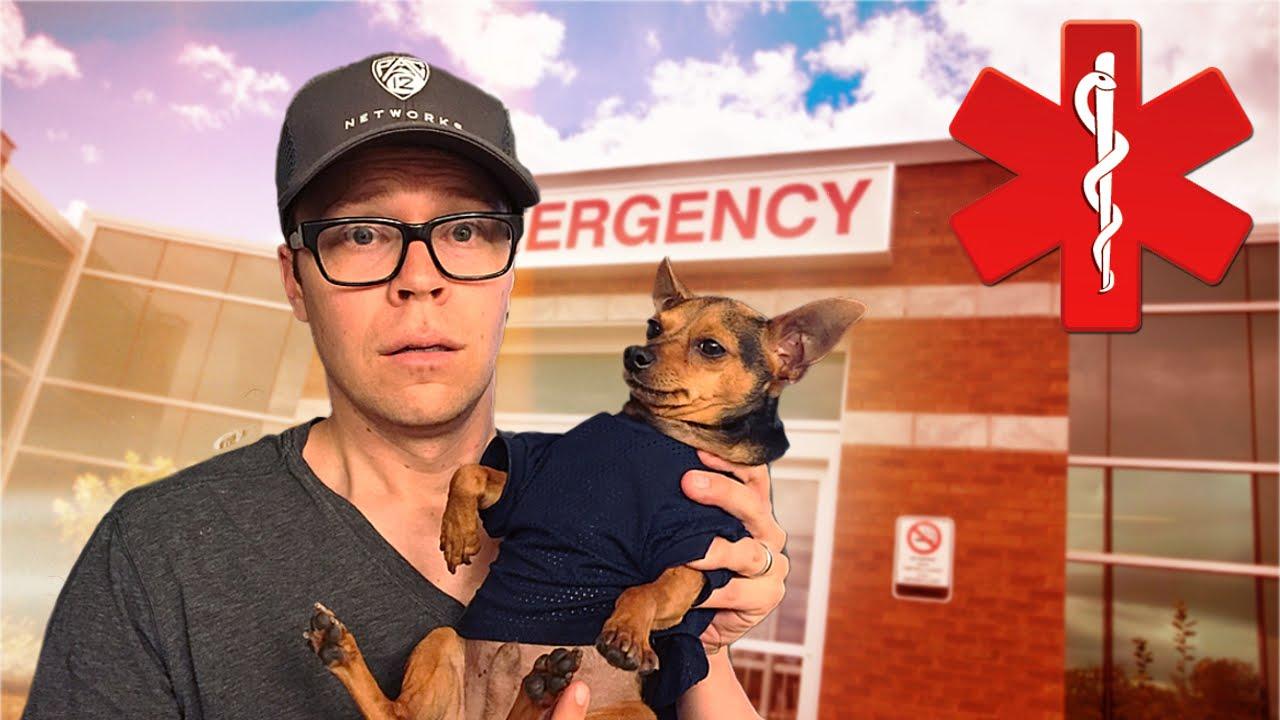 DOG EMERGENCY!!!