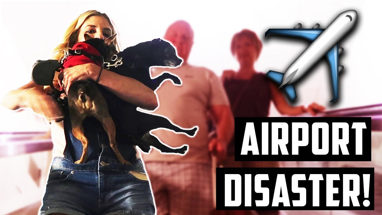 AIRPORT DISASTER WITH OUR DOGS! (Traveling is a challenge)